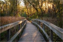 Autumn Sunset (Chris Lue Shing) Tags: fujixt10 fujinonxf1855mmf284r leaves park autumn ontario canada yellow toogoodpond boardwalk path sunset wood markham unionville chrislueshing