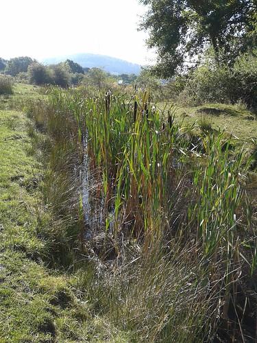 Ein Libellen-Biotop; Seilerberg b. Habichtswald , NGID1333459261