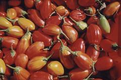 Orange Eggplant (meg williams2009) Tags: vegetable unusualeggplant stokesfarm unionsquaregreenmarket farmersmarket newyork nyc unionsquarepark heirloomvegetable