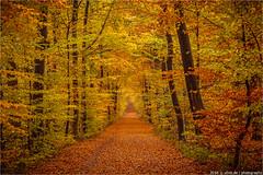 _novemberfire (l--o-o--kin thru) Tags: kreuzweg coesfeld
