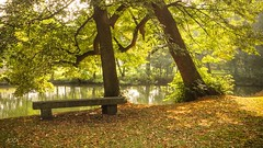 The Sitting Room (babs van beieren) Tags: bench park water green autumn 7dwf saturday landscape