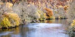 Charente river (Jean-Luc Peluchon) Tags: fz1000 nature color autumn arbre tree couleur feuillage foliage reflet