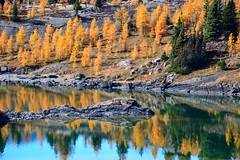9. Symmetry - 116 Pictures in 2016 (Krasivaya Liza) Tags: 116picturesin2016 9 symmetry reflections lake sunshinemeadows alberta canada trees fall larch
