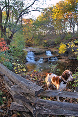 Panther Creek Falls and owners dog (trinity091319) Tags: dayton ohio waterfalls falls cascade fall autumn foliage leaves hike travel west milton cascades water