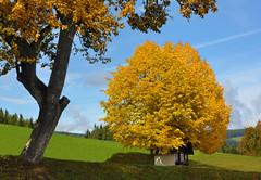 Unsere Kapelle... (Mariandl48) Tags: kapelle lindenbaum sonne schatten sommersgut wenigzell steiermark austria
