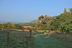 Autumn Sun (Deepgreen2009) Tags: autumn sunshine garden home surrey clear hills ranmore dorking west weather warmth