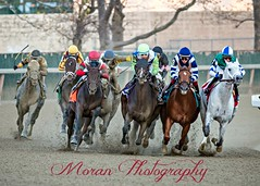 2016 Cigar Mile (EASY GOER) Tags: horse racing sports cigarmile nyra aqueduct thoroughbreds equine canon 5dmarkiii