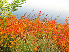 Autumn Leaves (Cher12861 (Cheryl Kelly on ipernity)) Tags: chicagobotanicgarden glencoeillinois autumn fall season leavesonthewater colorful orange