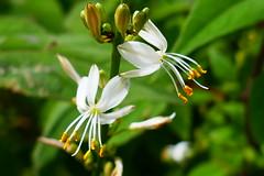 P1010428 (Laurence Bee) Tags: flower flowers pollen petal plant specnature