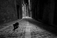 Visso / Macerata (Cristianella) Tags: visso macerata marche italy earthquake terremoto cat gatto