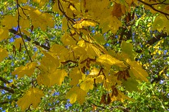 Autumn At It's Best (jimgspokane) Tags: autumn fall spokanewashingtonstate trees leaves otw