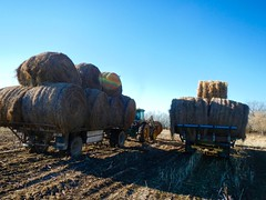 Hay Day! (Jeannette Greaves) Tags: 2016 moving hay bales ad2rlhomeyard hugh jeannette decto