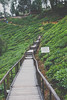 DSCF1119 (tzeyangtan) Tags: cameron highlands getaway green sgpalas tea plantation photography
