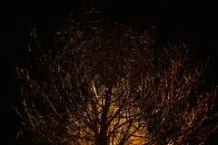 Lit from Behind (en tee gee) Tags: night tree streetlight backlit circles