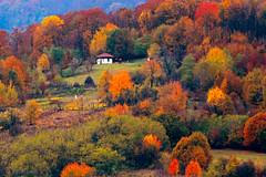 (Alin B.) Tags: alinbrotea nature autmn fall toamna october november rusty rustic tree woods forest