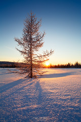 winter on north of Siberia (czdistagon.com) Tags: snow tree background winter new year landscape season forest fir holiday sky scenery nature frost beautiful sun frozen blue natural ice light snowfall outdoor vacation morning sunlight idyllic sunrise fresh card shape snowy travel cold distagont2821