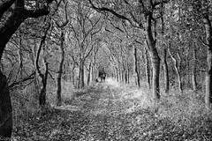 Autumn (peterpj) Tags: noordhollands duinen sony a6300 sigma3014c sigma holland trees bw landscape landschap silverefexpro2 noordhollandsduinen