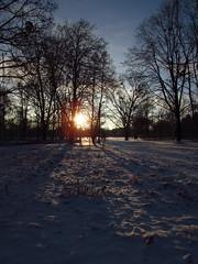 270/365 Morning sun (zinushana) Tags: project365 projectlife project morning sun light sunshine 365