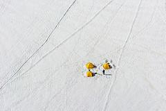 Yellow tents (Bjrn Wergeland) Tags: chamonix tent glacier snow sn gul yellow tlt mtblanc public