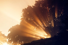 Morning has broken  (35/50) (Stuart Stevenson) Tags: uk autumn trees mist sunrise photography scotland explosion valley rays burst hillside contrejour bonkers clydevalley stuartstevenson appicoftheweek scotlandsunburst