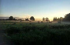 Autumn morning (pictureThis-d.i) Tags: morning autumn mist countryside early cattle northernireland iphone picturethis magherafelt castledawson ruralulster