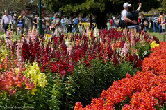 Carnival of Flowers in Toowoomba (Tatters ) Tags: flowers festival garden spring australia qld queensland toowoomba