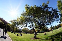 Park (Benny2006) Tags: park shadow sun tree alexandria grass sunshine relax virginia lifestyle casual leisure rays sunrays oldtown