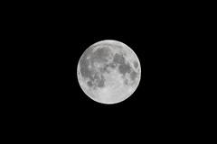 Supermoon (Strangelove 1981) Tags: ireland dublin moon eclipse luna full fullmoon lunar lunareclipse supermoon