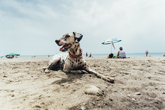 Sand and Pitia (Leo Hidalgo (@yompyz)) Tags: dog love film animal canon photography eos reflex random cam like perro dslr dalmatian 6d fotografa dlmata vsco ileohidalgo yompyz