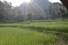 _DSC0251 (www.adrenalinenepal.com) Tags: travel nepal color colour green landscape asia explore villagelife campnepal