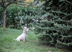 20 October 2015 (Colorado_Eric) Tags: dog landscape edited day293 day293365 365the2015edition 3652015 20oct15