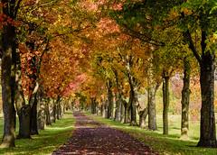 Fall Walk (snooker2009) Tags: road autumn trees fall nature colorful pennsylvania path walk lane treelined