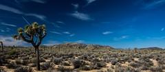 Joshua Tree National Park (Kent Freeman) Tags: california park tree ed dc pentax joshua hill national imaging smc ricoh wr k3 alif f3556 superfotos 18135mm pentaxda malapai spitzenfotos