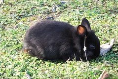coniglino nano batuffoloso (PhoToRCh) Tags: pet pets macro rabbit animals duck colori animali cucciolo uccello coniglio papera anatre viaggiare batuffolo