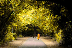 The walk into the nature (athul vinod) Tags: woman people nature landscsape forest yellowfilter road travel rural india iitmadras chennai autumn natgeo bbc