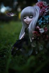 Finding One Lost Boy (dreamdust2022) Tags: suigintou pretty kind sweet tender dark evil loving lonely sadness pain darkangle princess pullip doll