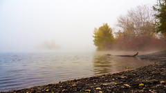 Binsfeld, Speyer (Andreas Kuehntopf) Tags: speyer binsfeld lake see november herbst autumn mist