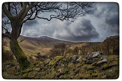 Framed (JDWCurtis) Tags: brecon breconbeacons breconbeaconsnationalpark nationalpark mountains mountain penyfan wales southwales bbcwalesnature breconshire tree wall nature outside field green clouds peak frame