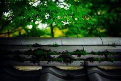(sunnywinds*) Tags: autumn kyoto leica summilux maple momiji fall tile     eikando buddhist temple