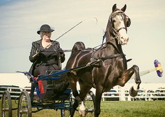 From the horse show (toddrappitt) Tags: exhibition september collingwood ontario greatnorthernexhibition horseshow animals vegetarian6 ladyrider horseandcarriage horse t4i rebel canon