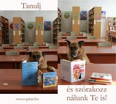 olvass_nalunk_OPKM (OPKM) Tags: 30kép 30kép6 kutya opkm olvasás frakk pedagógiaiszakkönyvtár rendőr könyvtár cuki
