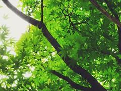 Leaves (Jon-F, themachine) Tags: jonfu 2016 sony cybershot dscwx70  digital digitalphotography snapseed japan  nihon nippon   japn  japo xapn asia  asian fareast orient oriental aichi   chubu chuubu   nagoya  outdoors  nature  plant plants  flora leaves