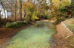 Algae Bloom (pilechko) Tags: lambertville nj delawareriver algae green color slime lewisisland bridge