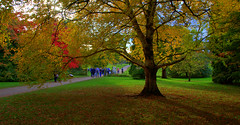 Season on color palette (Renny Abraham) Tags: westonbirt aboretum autumn fall tetbury gloucestershire