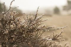IMG_7587 (Marcel Hendriks) Tags: veluwe heath