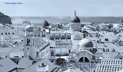 les   toits  de  Dubrovnik  (philippedaniele) Tags: vividstriking monochrome dubrovnik vieille ville toitures