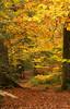 Dunsford Woods, Devon 3a (chris-parker) Tags: river teign devon steps bridge dunsford stepping stones village autumn