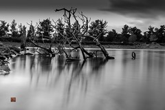 back to surface.... (Ntino Photography) Tags: beletsilake mountparnitha athens greece canoneos5dmarkiii canon35mmf2 cloudysky water deadtrees shore rocks blackandwhite mon longexposure tripod ndfilter daylight submerge attica autumn outdoor nature