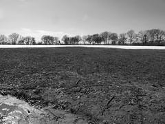 Field at Verrazano-Narrows, 2014 (Lee Yee Photography) Tags: calvertvaux gravesendbay rusticscenes coneyisland newyorkharbor coastalscenes centralpark prospectpark newyorktrees rooseveltisland statenisland flushingmeadows washingtonsquare brooklynlandscape verazzanonarrows