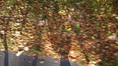 Autumn cycling (hugovk) Tags: hvk cameraphone uploaded:by=email autumncycling autumn cycling uusimaa helsinki finland geo:region=uusimaa geo:locality=helsinki geo:country=finland geo:county=helsingin helsingin exif:flash=offdidnotfire meta:exif=1479445275 exif:aperture=24 camera:model=808pureview exif:isospeed=64 exif:exposure=1148 camera:make=nokia exif:orientation=horizontalnormal exif:exposurebias=0 exif:focallength=80mm nokia 808 pureview carlzeiss nokia808pureview hugovk september syksy 2016